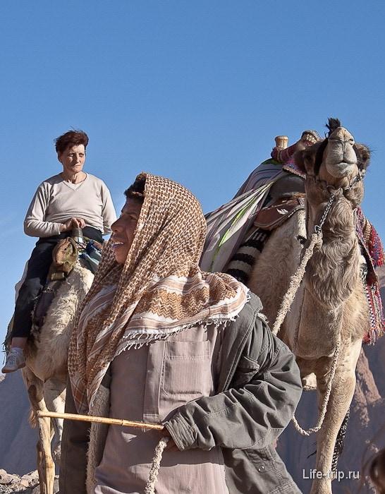 Гора Моисея. Молодой бедуин и его дромедар.