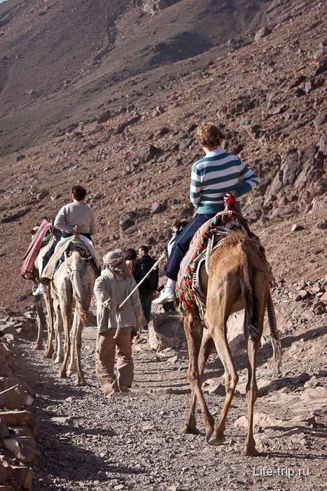 Гора Моисея. Верблюжья процессия.