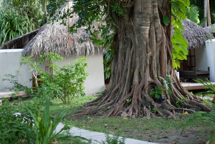 Растительность на Мальдивах.