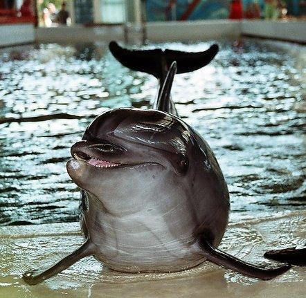 Биостанция - Дельфин