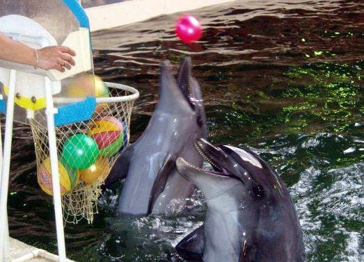 Биостанция - Дельфины
