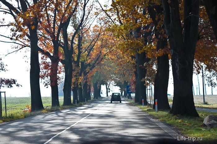 Дорога-аллея - распростаненное явление в Европе.