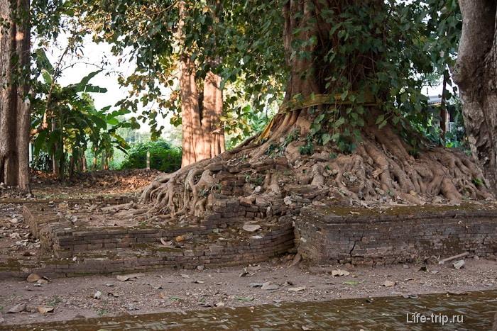 Деревья отвоевывают территорию у древних Ватов