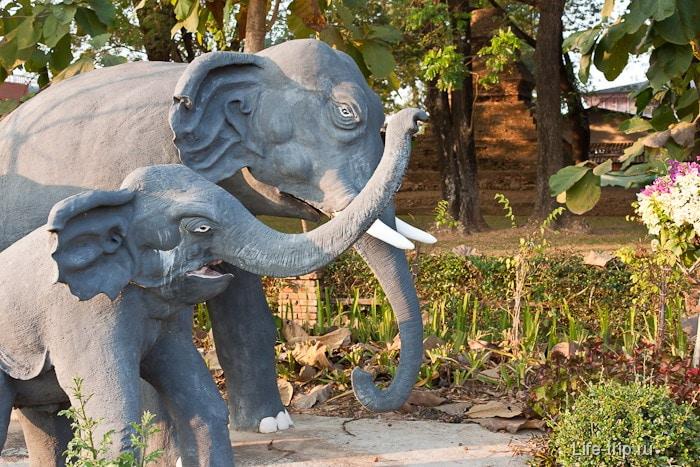 Слоны тут вечно чем-то недовольны