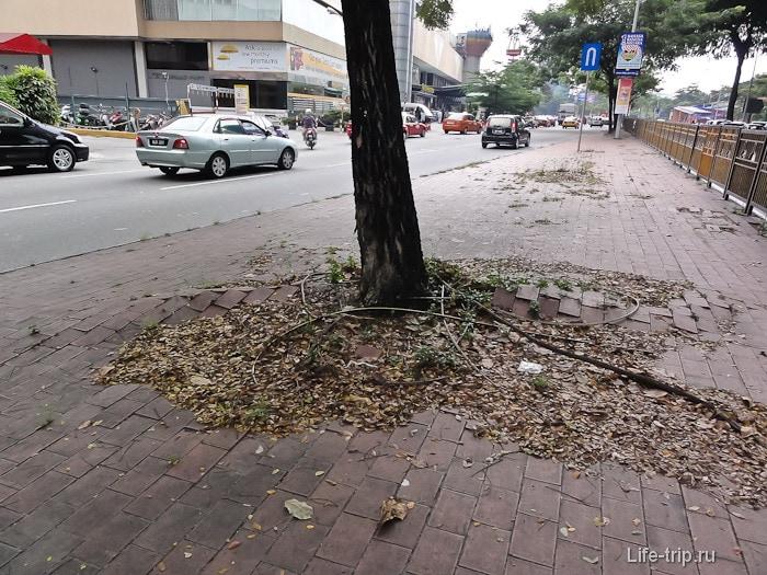 Корни деревьев рвутся на свободу