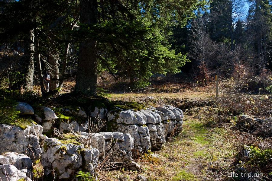 Деревья растут прям на камнях