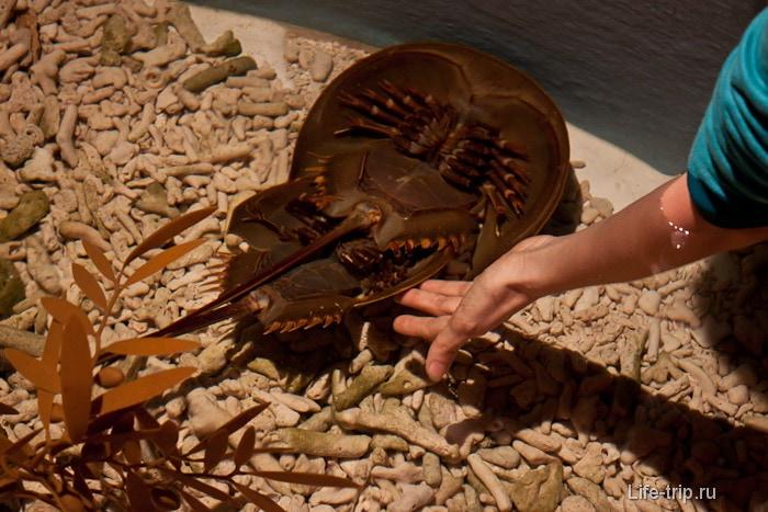 В специальном аквариуме можно потрогать спаривающуюся живность
