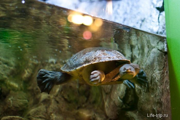 Длинношеее черепахо с мордой, как у змеи