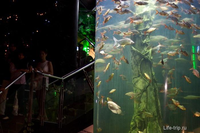 Вход на нижний этаж Океанариума Куала Лумпур