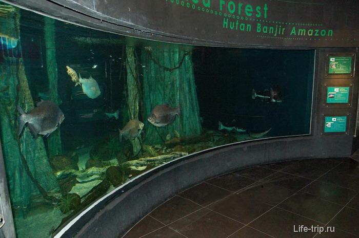 Один из больших аквариумов Океанариума