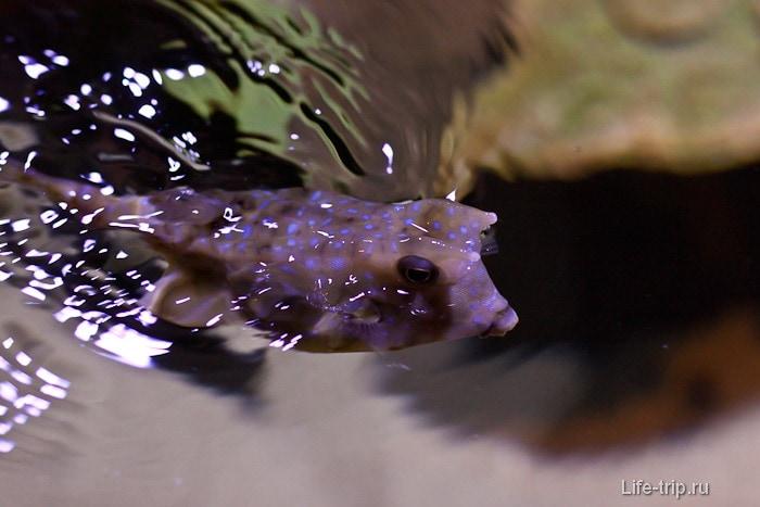 Смешная рыбка с выпученными глазами