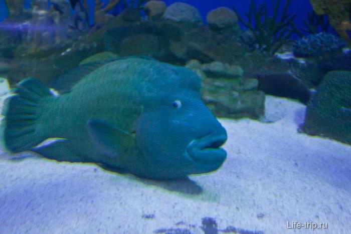 Смешная рыба