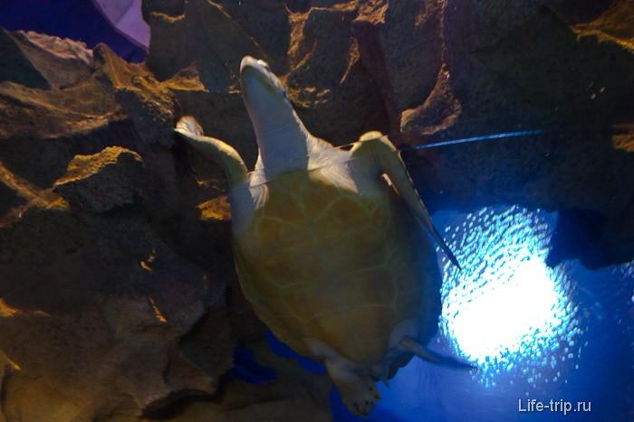 Гигантская черепахав океанариуме Куала Лумпур