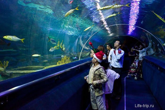 Туннель в Океанариуме Куала Лумпур
