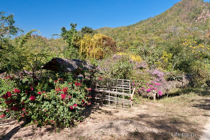 Кругом цветы, лианы и прочая растительность