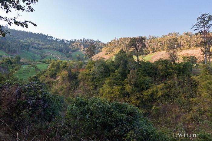 Буйная растительность около водопада