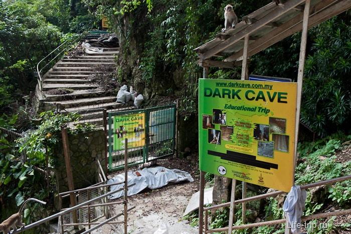 Темная пещера Dark Cave