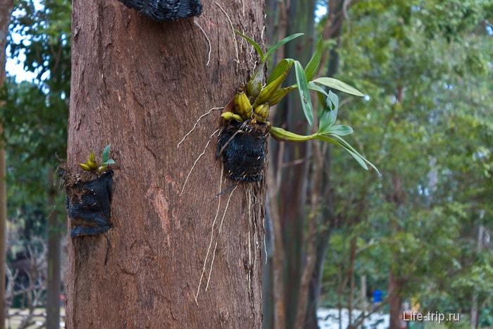 Рассада на деревьях