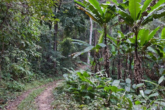 Грунтовая дорога к Doi Suthep