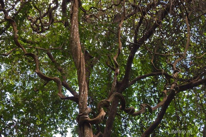 Кругом джунгли