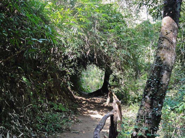 Дорожки в парке Doi Suthep