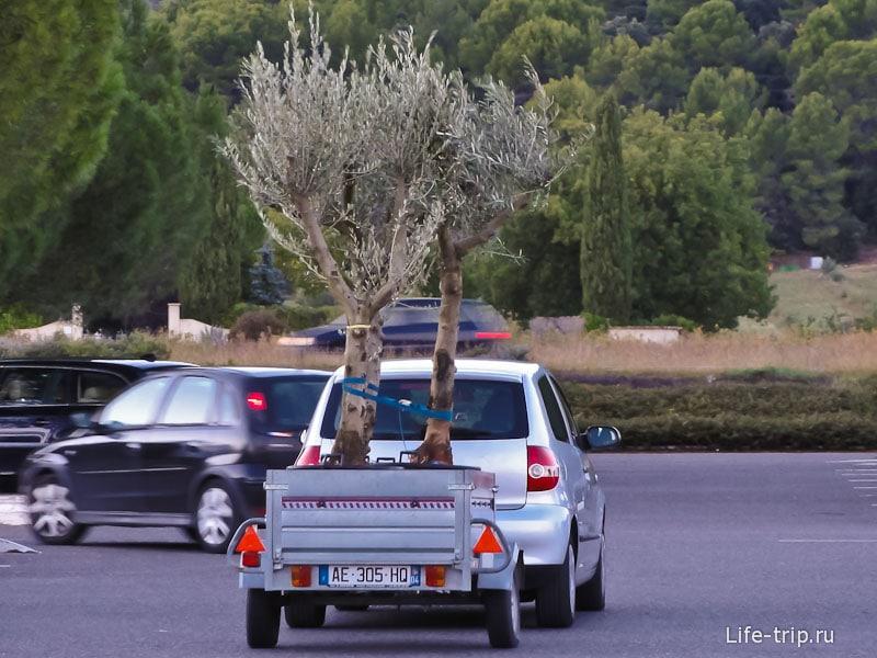 Купи одно дерево, получи второе в подарок