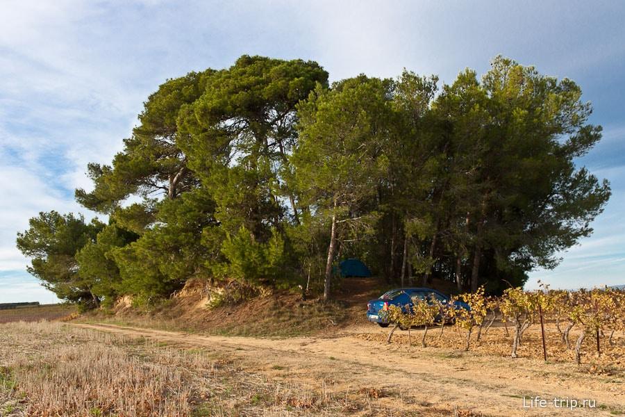 Одна из наших ночевок - островок деревьев в чистом поле