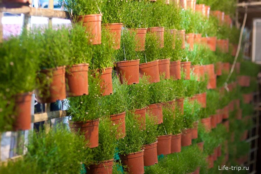 Зеленые прилавки на фестивале цветов