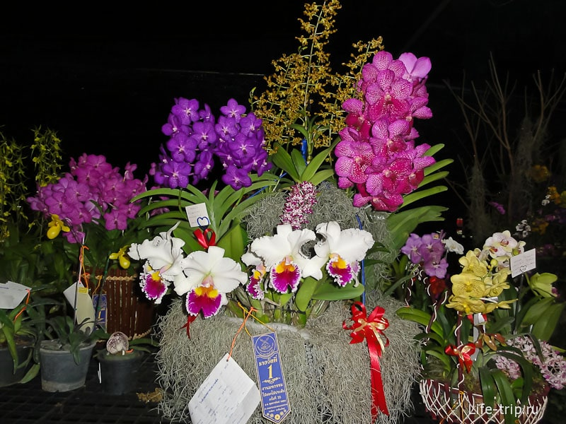 Орхидеи на фестивале цветов Таиланда