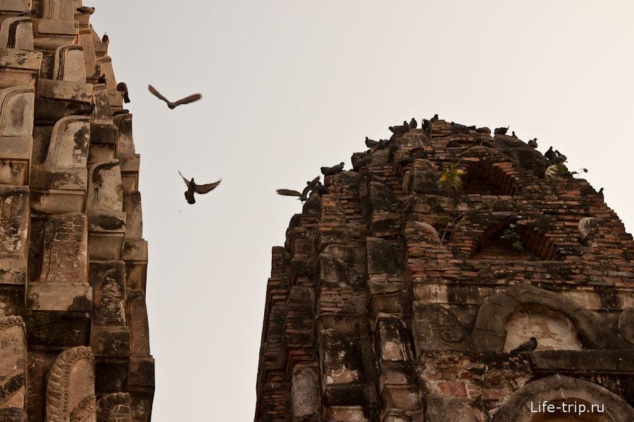 Голуби загадили весь Wat Si Sawai