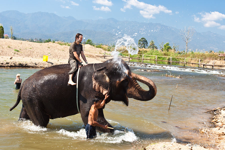 Катание на слоне и купание удалось, пора домой