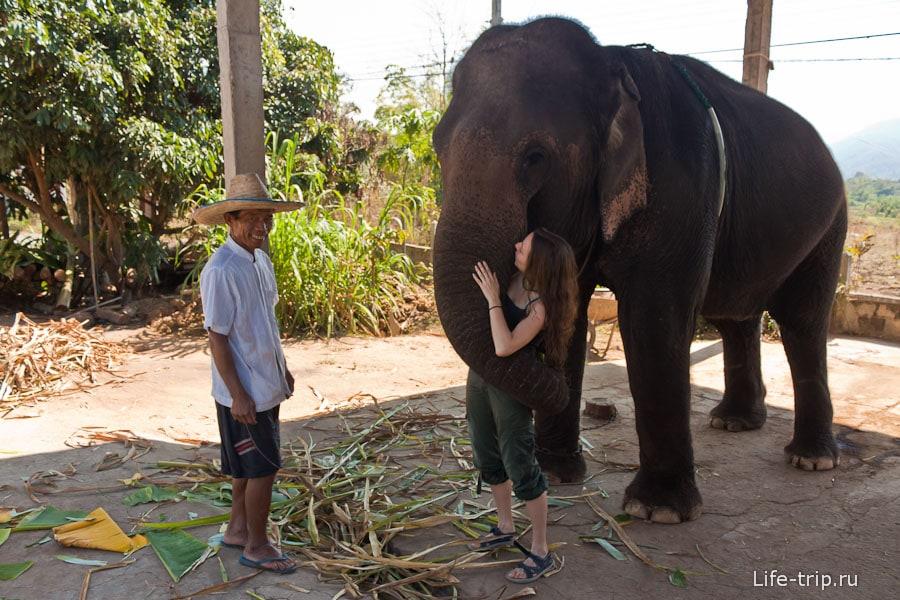 Хоть это и отрепетированный жест со стороны слонихи, а приятно