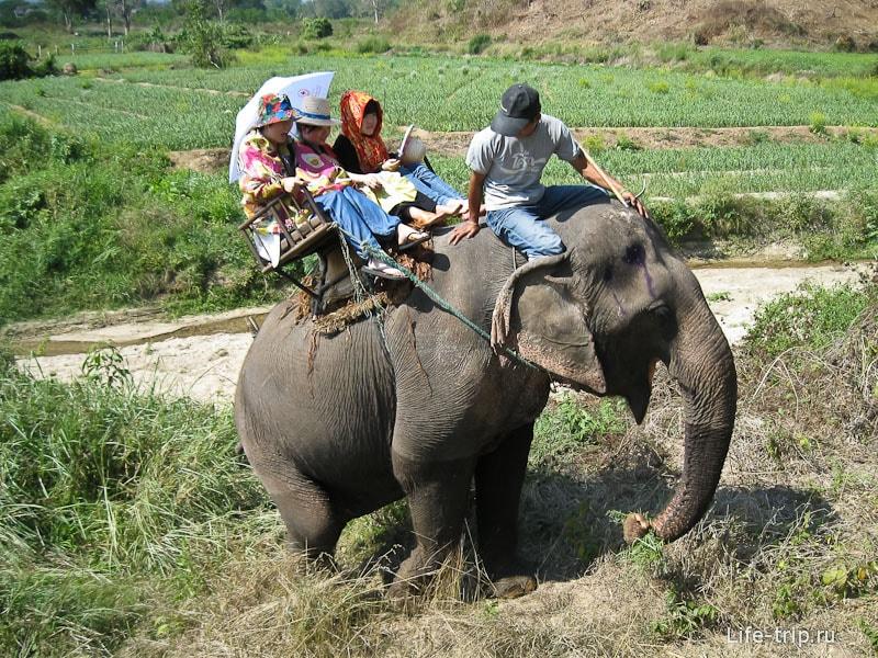 Так катают на слоне с седлом-креслом