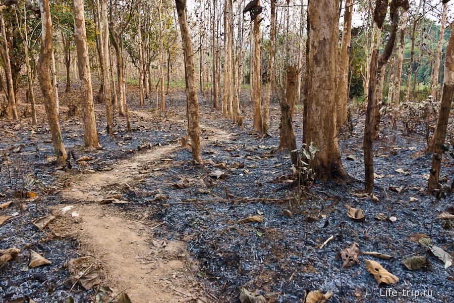 Обгоревший лес около школы