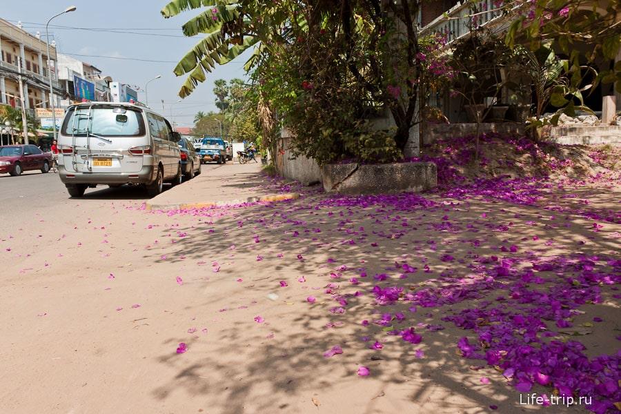 Тротуары в цветах