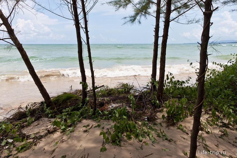В прилив волны почти омывают деревья
