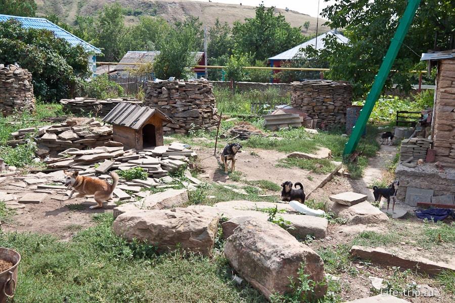Сторожевые псы Колодкина