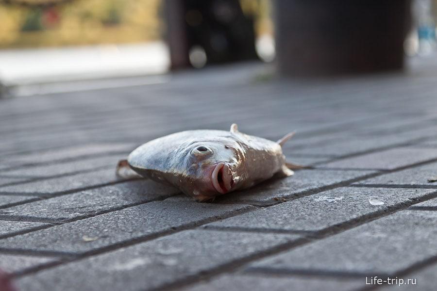 Рыба на набережной в центре города