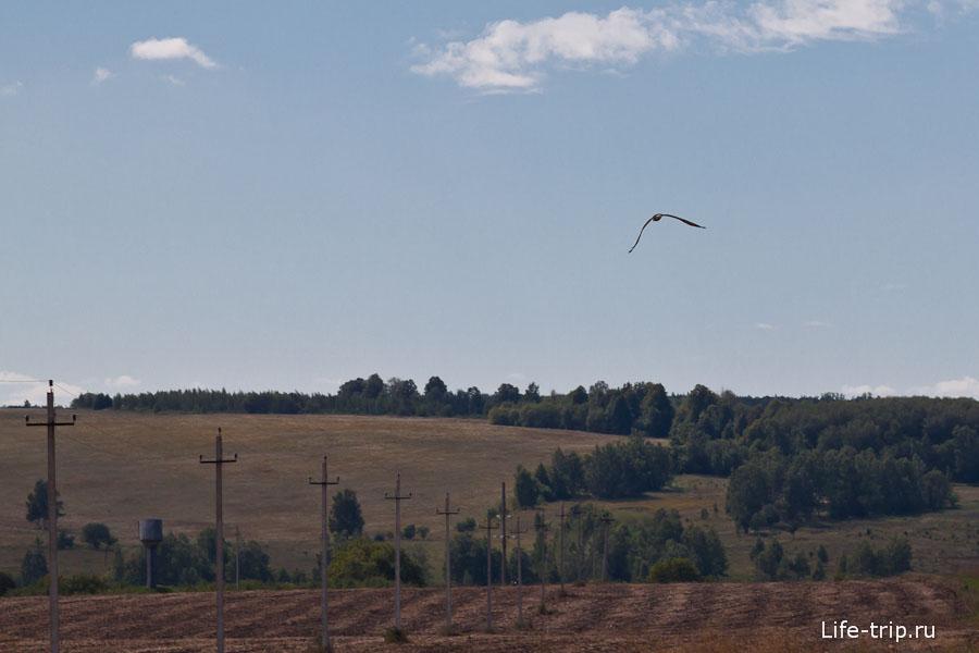 Хищные птицы летают над полями