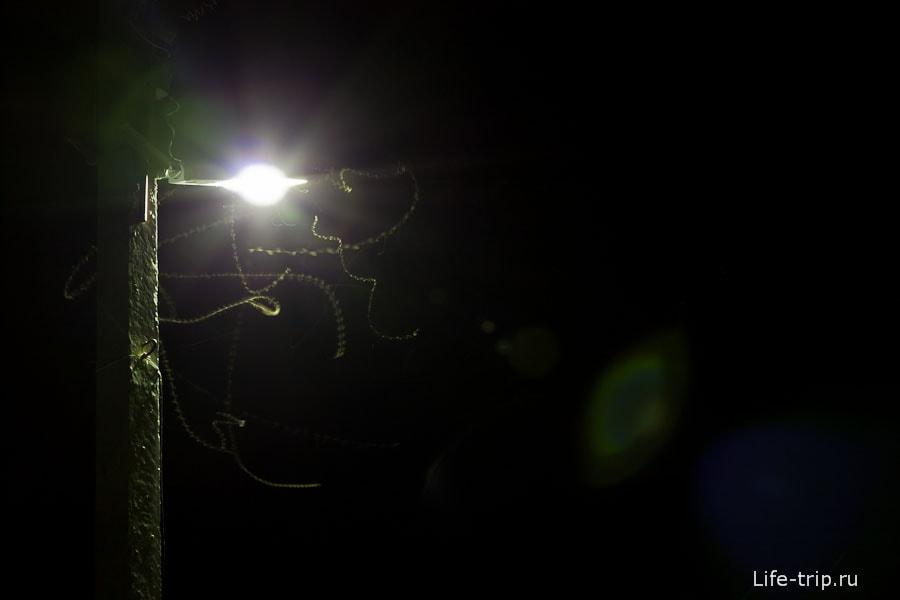 Ночные летающие черви
