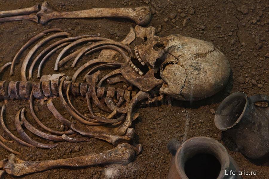 Скелет Танаинта