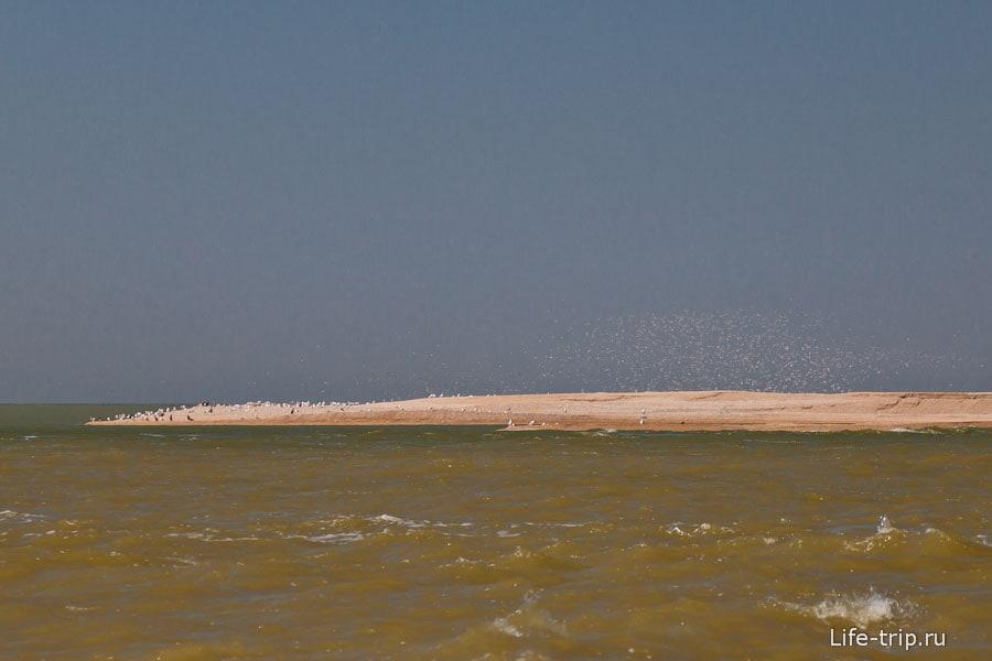 Неподалеку остров с чайками и бакланами - продолжение косы