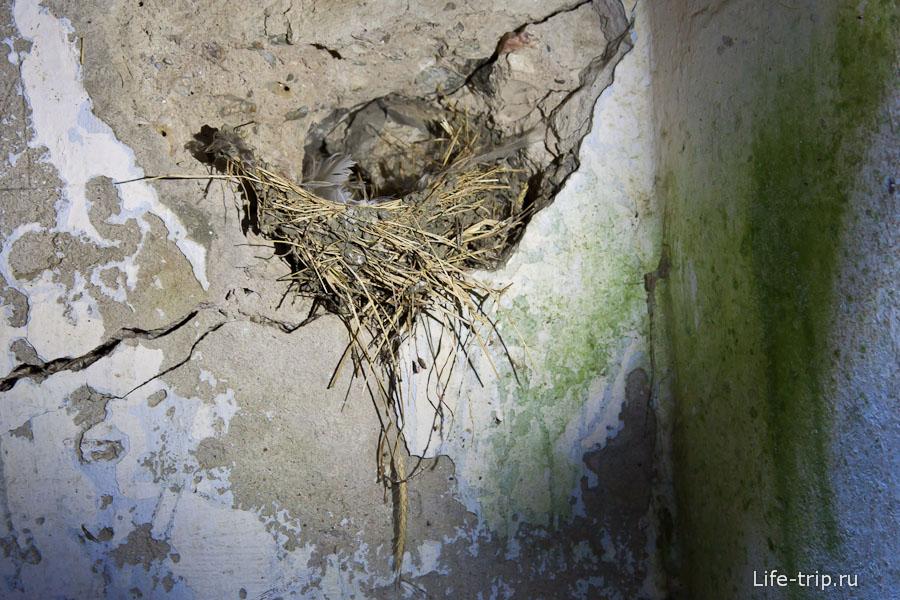 Птицы свили гнездно в руинах