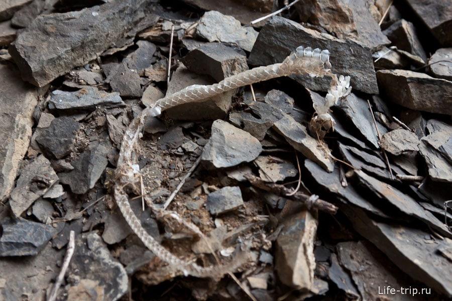 Шкурка от змеи