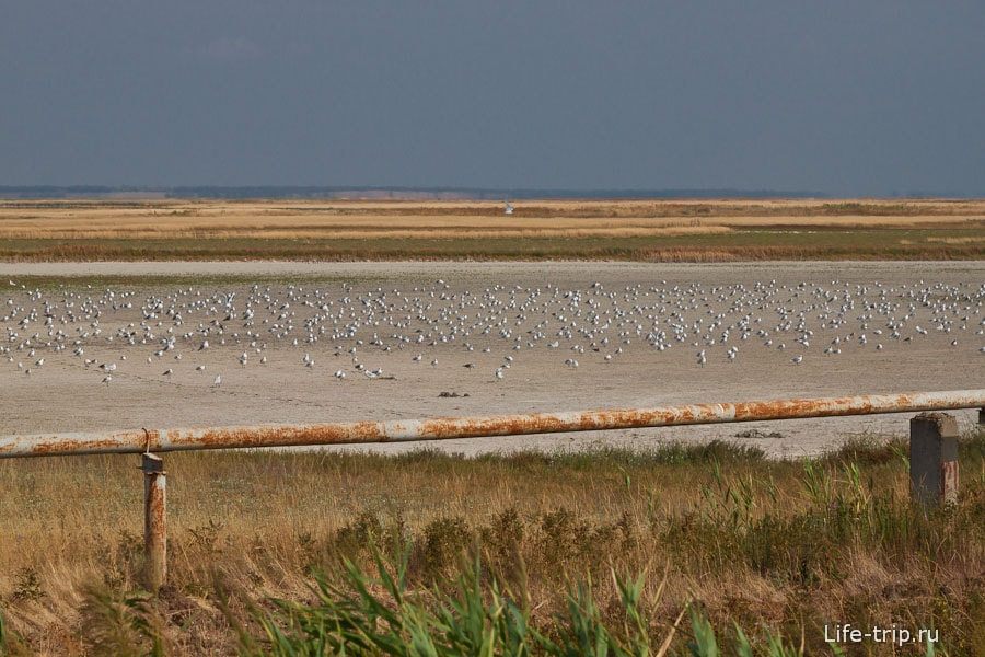 Птичий базар - начало Ханского озера