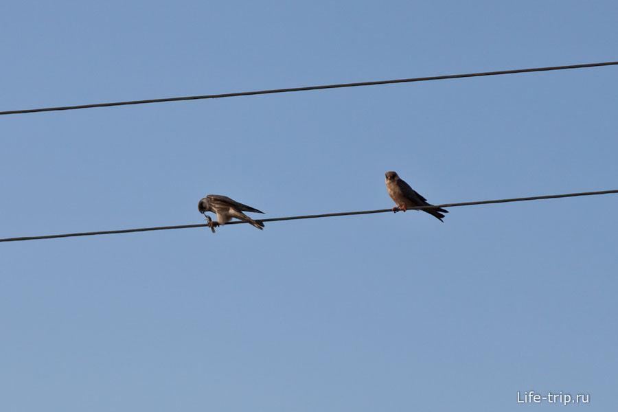 Хищная птица ест кого-то