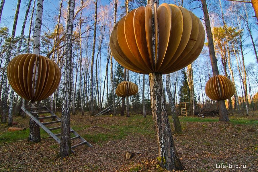 Деревянные грибы на березах
