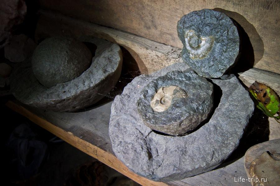 Аммониты находятся внутри круглых камней