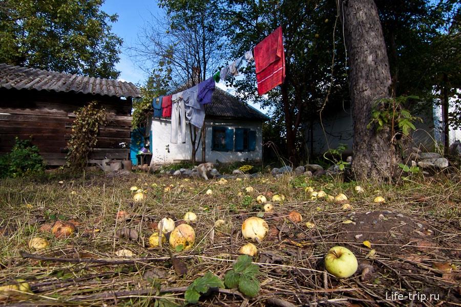 Свои яблоки, не молдавские