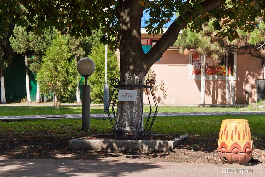Аллея деревьев-городов
